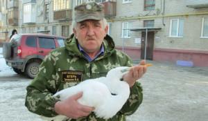 В Алтайском крае егерь спас истощенную редкую цаплю.