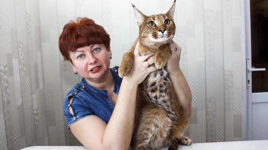 Под Барнаулом выводят самую редкую породу кошек в мире.
