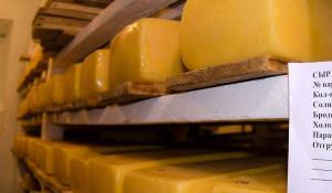 В Красногорском районе умеют делать хороший сыр.