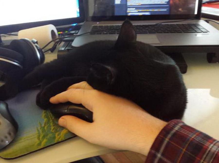 Коты, которые не дают работать.