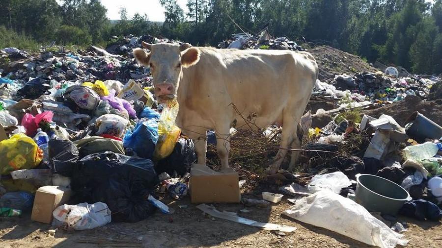 Системой вывоза твердых коммунальных отходов хотят охватить, в том числе, сельскую местность.