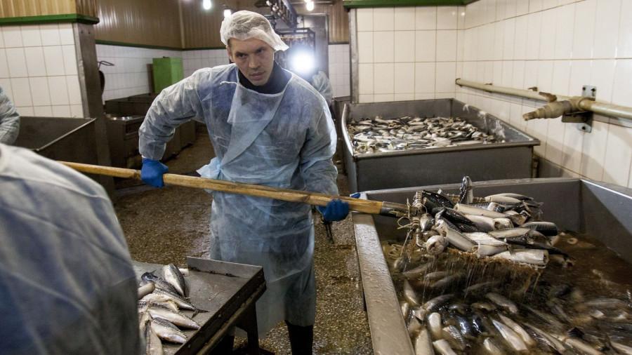 Производство рыбы на Алтае