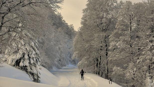 Зима. Мороз. Лес.