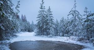Лес. Озеро. Зима.