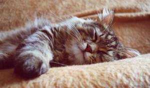 Кот. Отдых.