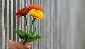 Подарок. Цветы.