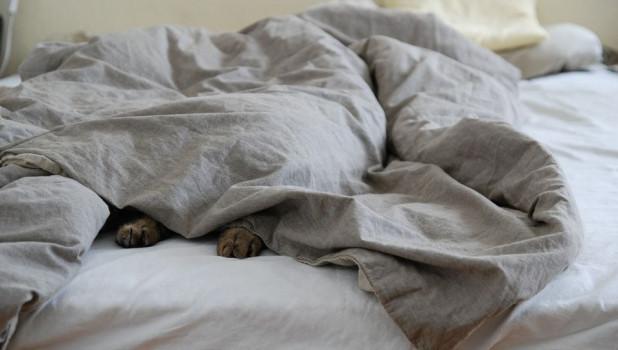 Отдых. Выходной. Кот. Отопление.