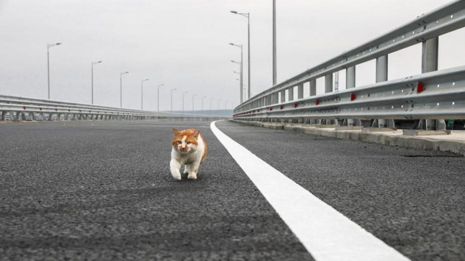 Кот Мостик живет на стройке Крымского моста.
