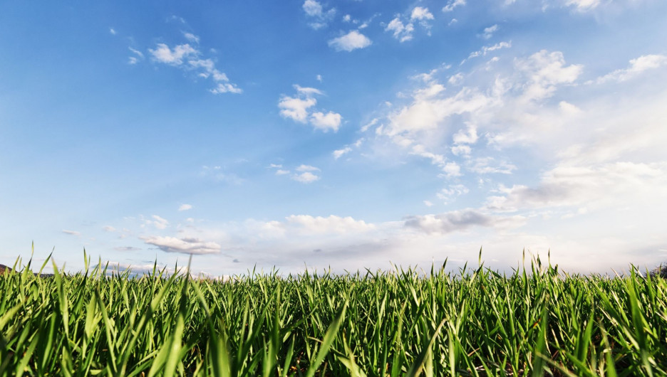 Лето. Трава.
