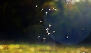 Комары.