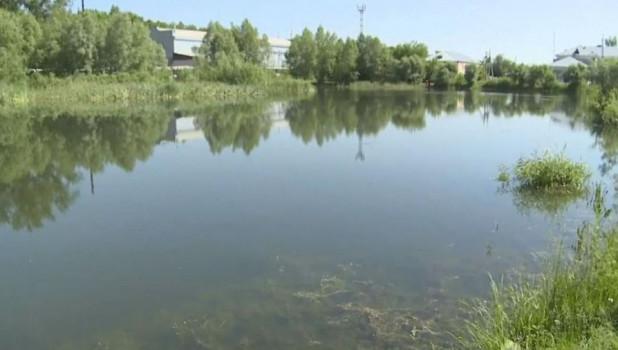 В Бийске пытаются спасти озеро Ковалевское, которое превращается в болото.