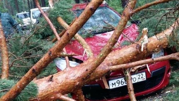 Из-за сильного ветра дерево упало на автомобиль.