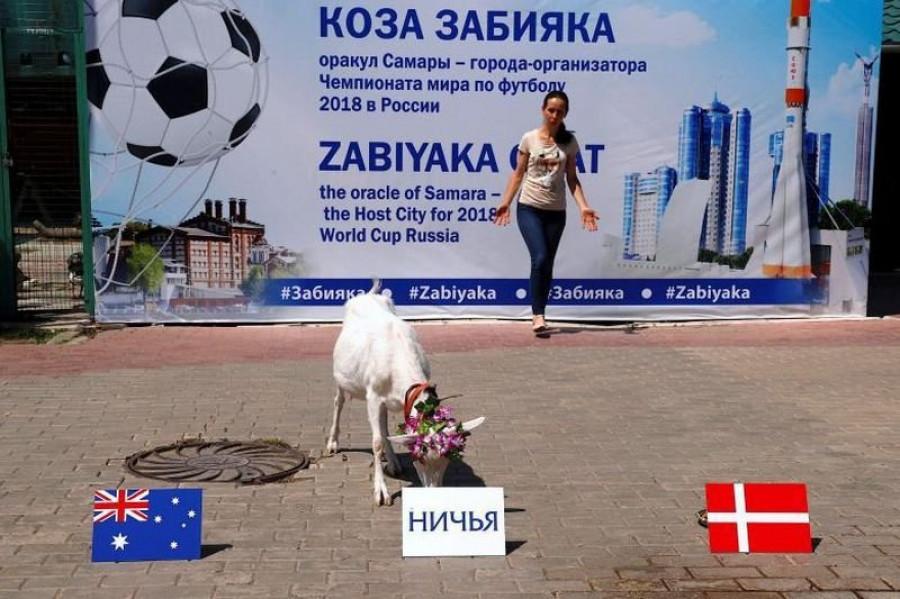Животные выбирают победителей в матчах чемпионата мира по футболу-2018.