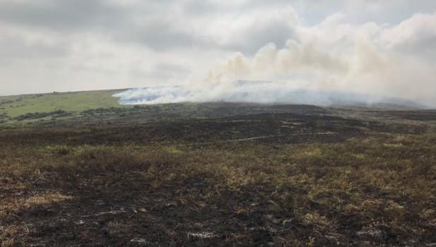 Тушение природного пожара в Новокалманке.