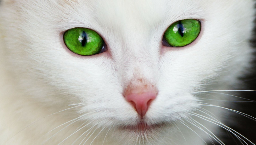 Кот. Глаза кошачьи