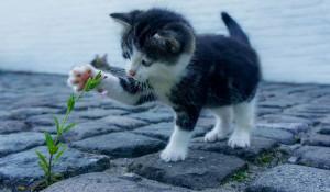 Котенок. Цветов