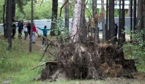 Лес в Барнауле после июньского шторма. Сентябрь 2018.
