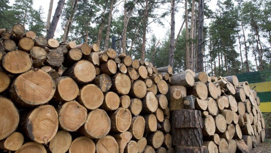 Сосновый лес. Дрова.