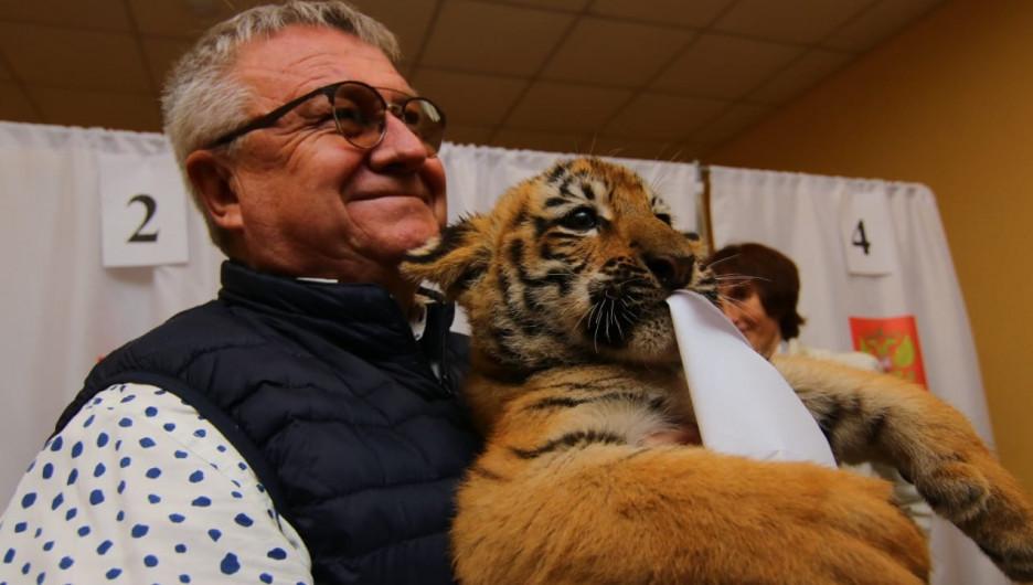Сергей Писарев пришел с тигрятами на выборы.