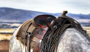 Лошадь. Седло
