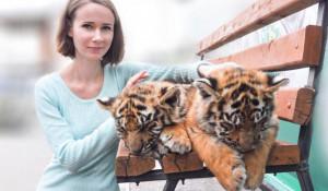 В Барнаульском зоопарке посетителям разрешили фотографироваться с тигрятами. 22 сентября 2018 года.