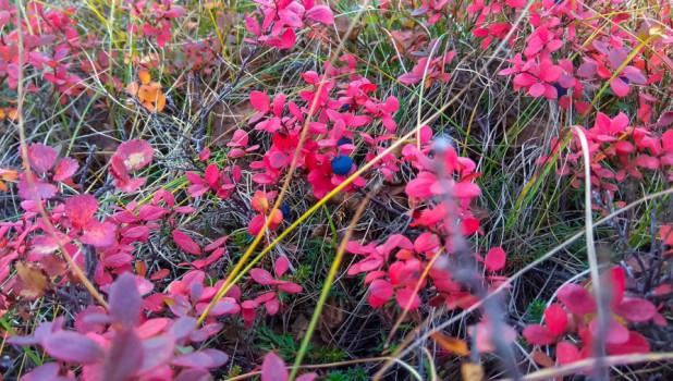 Растительность в тундре.