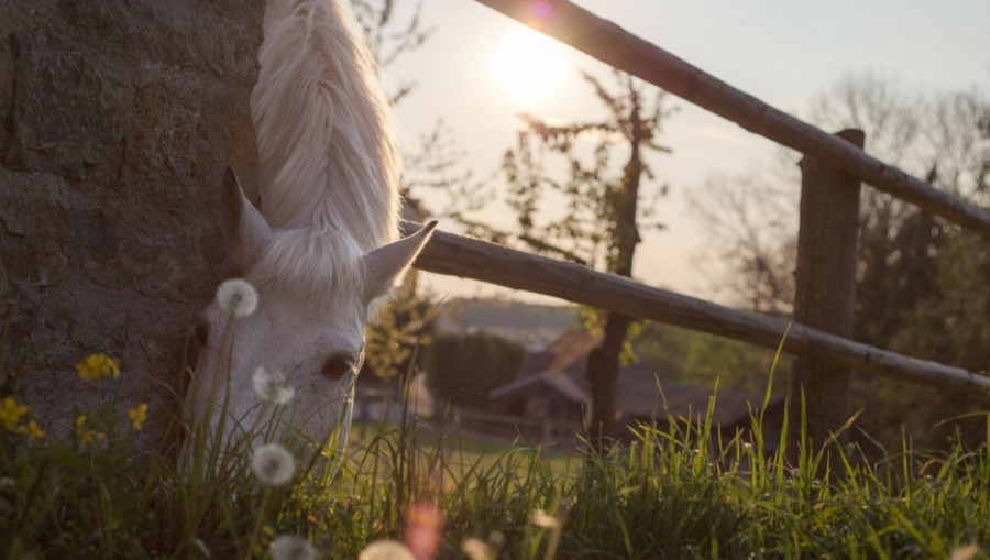 Лошадь. Конь