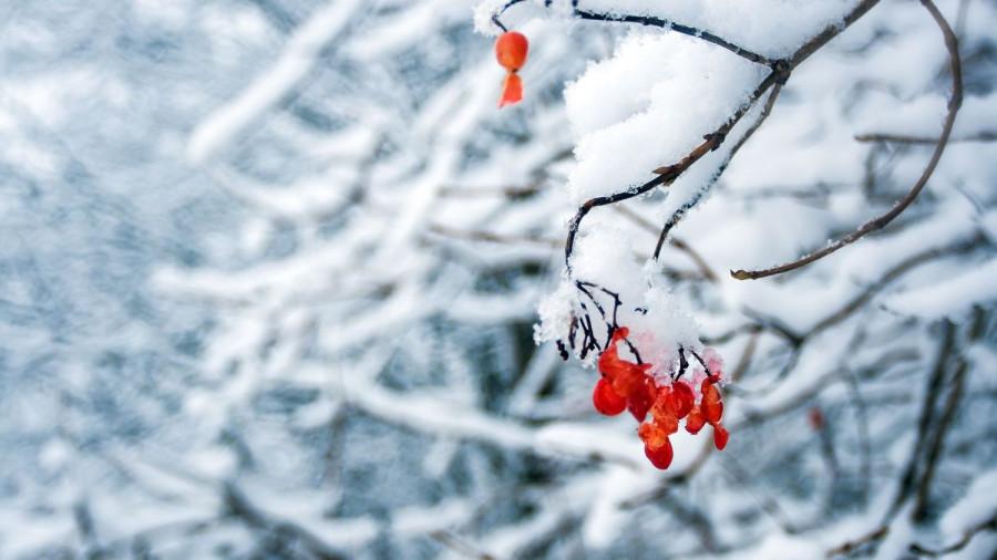 Заморозки. Первый снег.