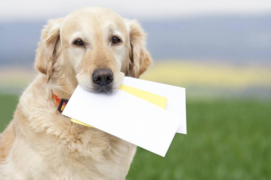 """""""Почта России"""" работает над ускорением доставки почтовых отправлений."""
