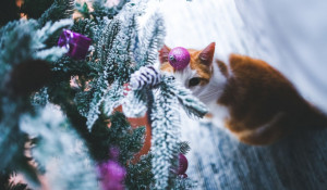 Новый год, Рождество. Кошка у елки.