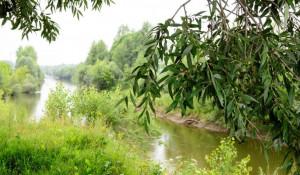Берег реки Лосиха.