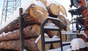 Незаконная рубка леса.
