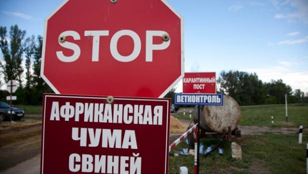 Плакат на границе. Африканская сума свиней.