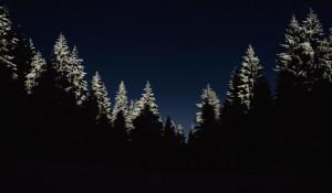 Ночь. Лес. Зима