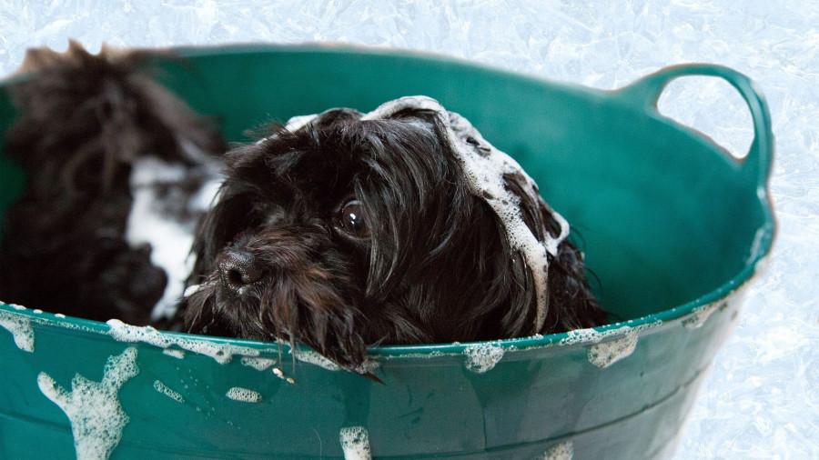 Собака моется.