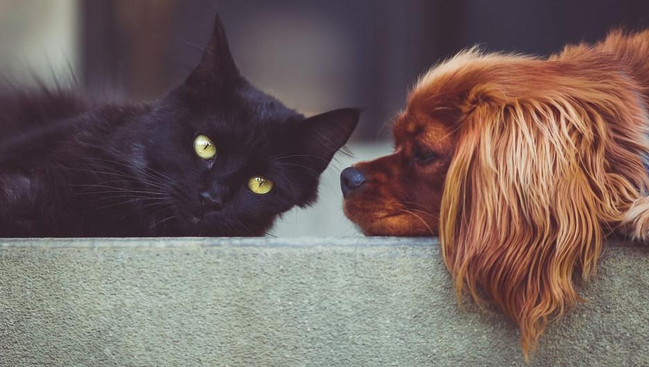 Кошка и собака.