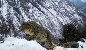 В долине реки Аргут прошла экспедиция по учетам снежного барса. Февраль 2019 года.