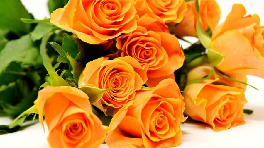 Цветы. Розы.