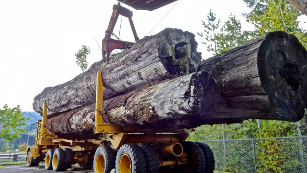 Лесовоз