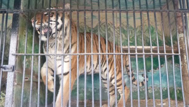 На границе Алтайского края задержали КамАЗы с редкими животными.