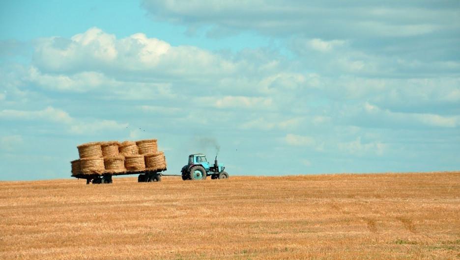 Урожай. Сельское хозяйство.