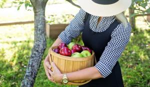 Урожай яблок.