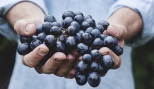 Урожай. Виноград.