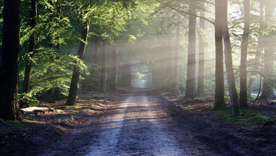 Лес. Дорога в лесу.