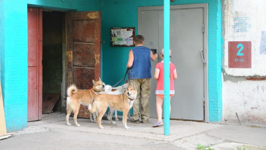 Собаки Надежды Фроловой.