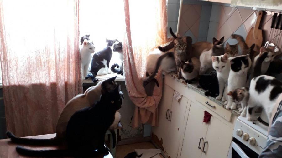 Кошки в проблемной барнаульской квартире.