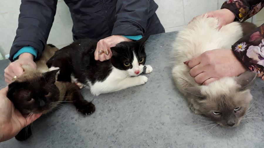 Кошки из проблемной барнаульской квартиры.