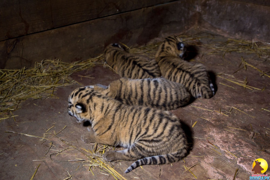 Животные в барнаульском зоопарке.