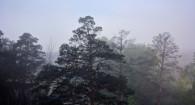 Туман над Барнаулом.