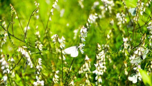 Природа Алтая, лето.